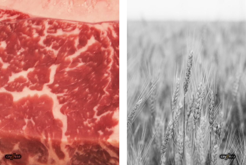 Carne de buey Black Angus alimentado con cereales